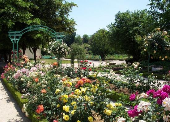 Rosier gloire de dijon au jardin de l 39 arquebuse dijon 21 21000 - Petit jardin robertson dijon ...
